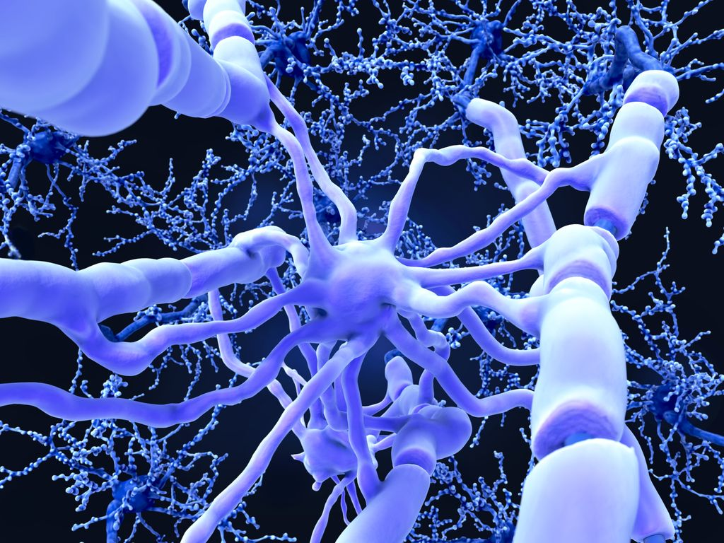 3D Cell Culture Proves Invaluable to Myelination Research