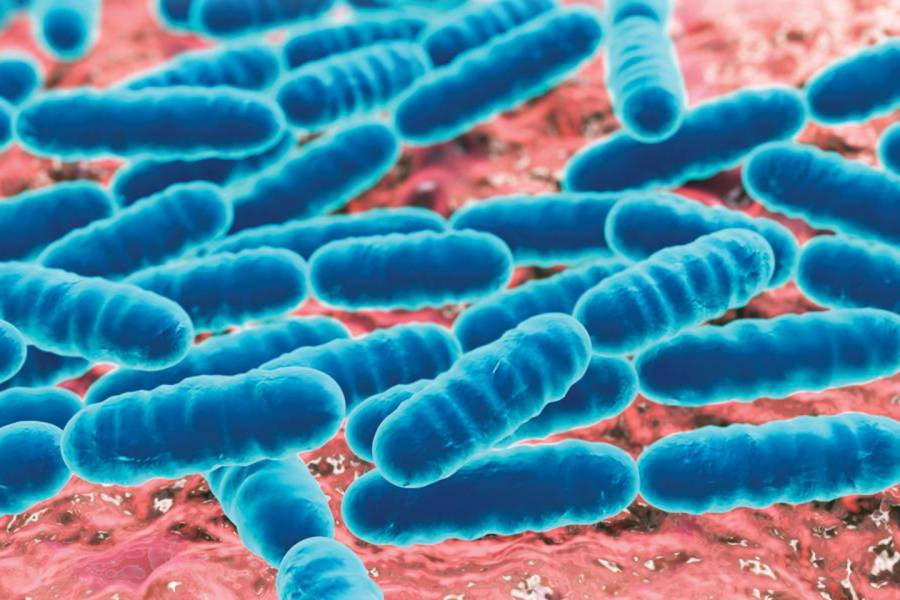 Understanding the significance of microbes in women's reproductive health